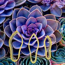 Succulent Çiçek Yapım Seti 3'lü